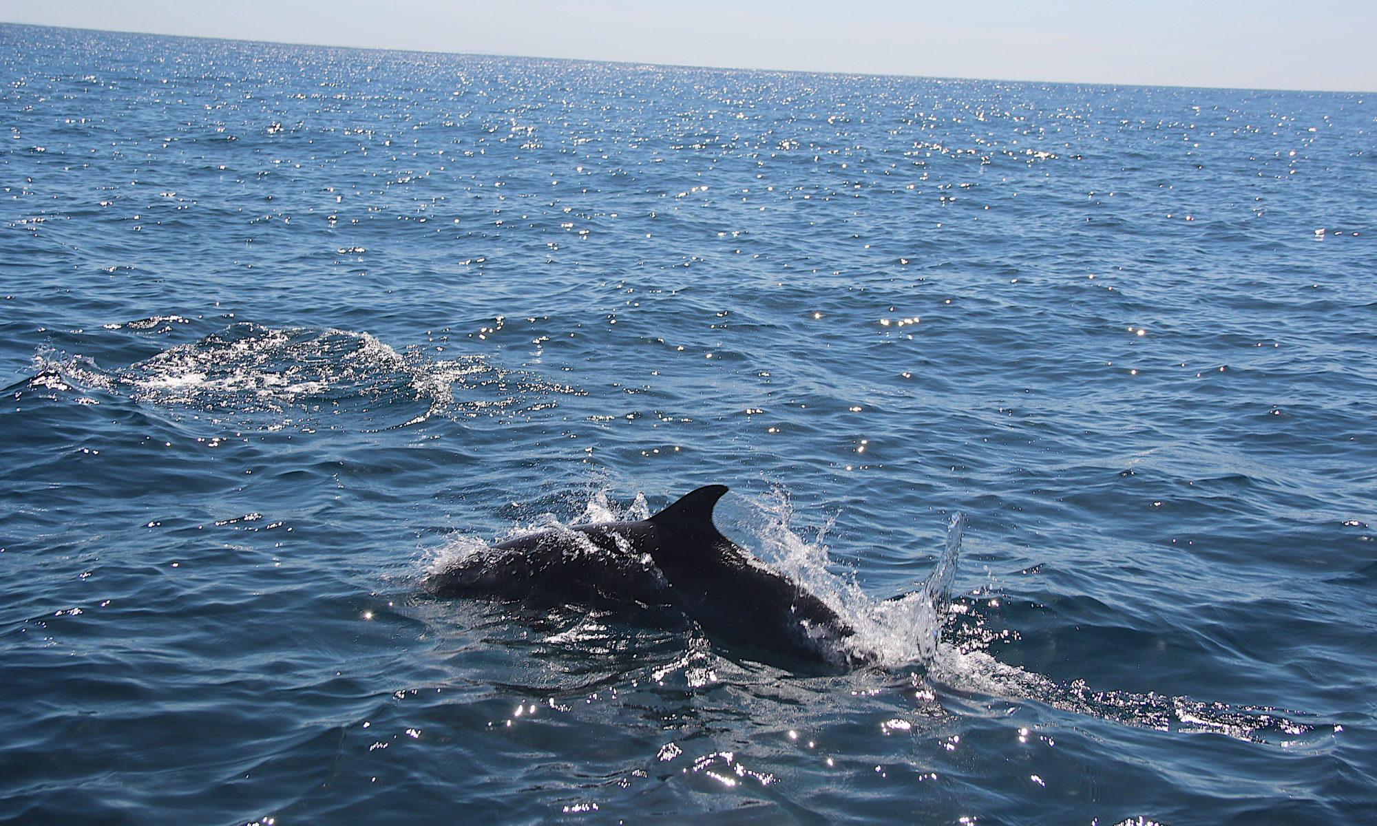 Delfine und Schildkröten Costa Rica